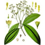 An Zhong Tang or Cardamon & Fennel Formula, Decoction of