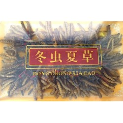 Cordyceps or Dong Chong Xia Cao, Whole, Unprocessed