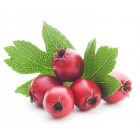 Hawthorn Single Herb Element